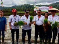 Tanam Padi, Wabub RD Ungkap Peranan Penting Sektor Pertanian